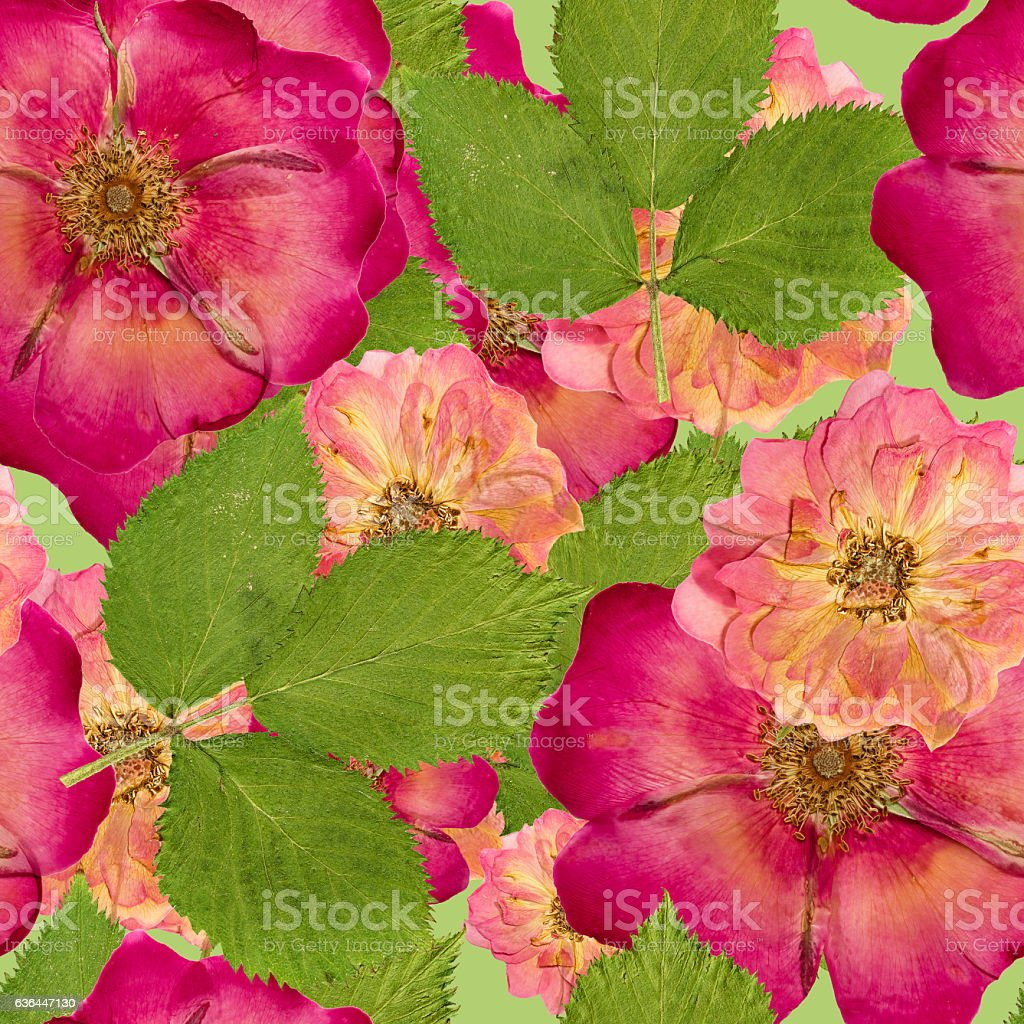 Briar, wild rose,. Seamless pattern texture of dry flower stock photo