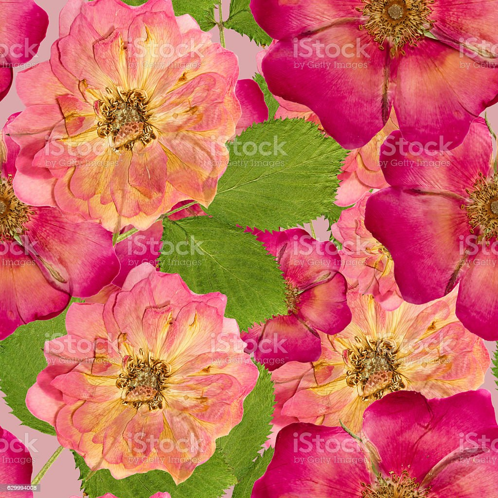Briar, wild rose. Seamless pattern texture of pressed dry flowe stock photo