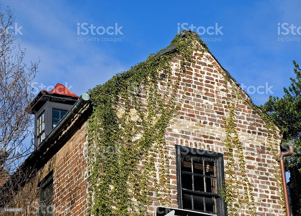 Brick Eaves Covered in Ivy royalty-free stock photo