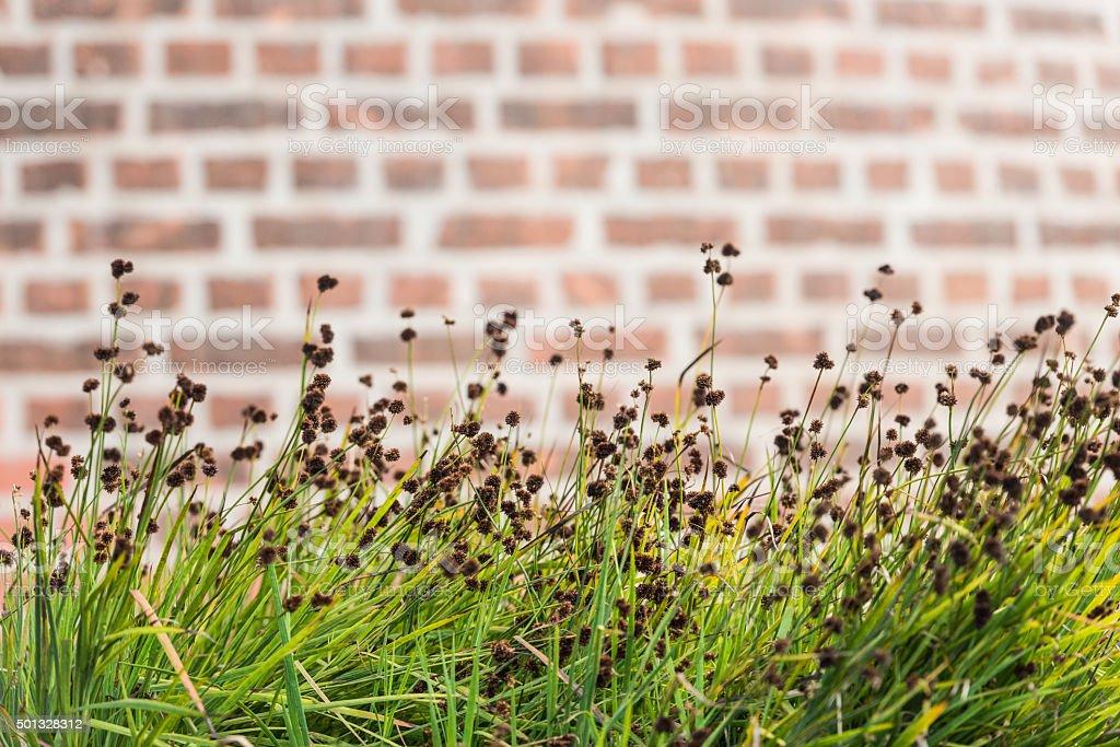 Brick Wall and Grass stock photo