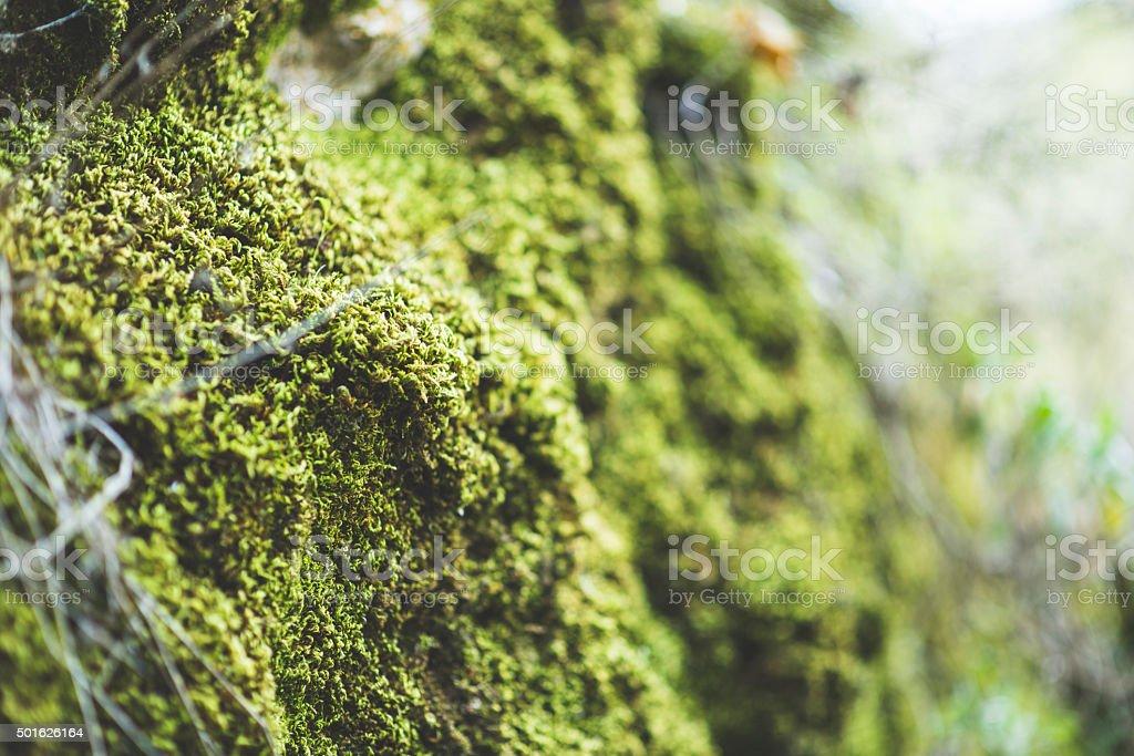 Brick wall and moss stock photo
