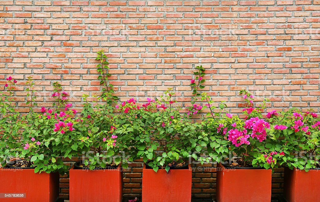 Brick wall background with flower in pot stock photo