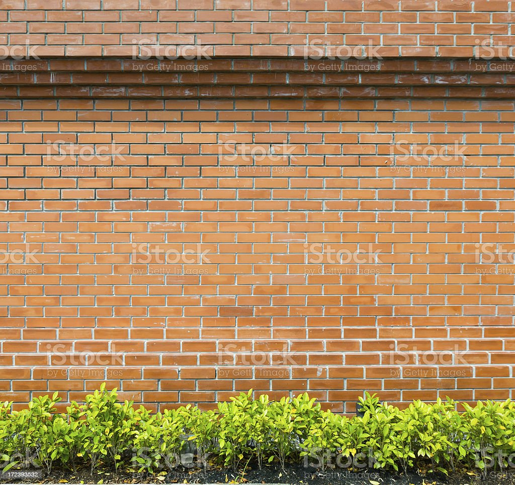 Brick Wall with green garden royalty-free stock photo