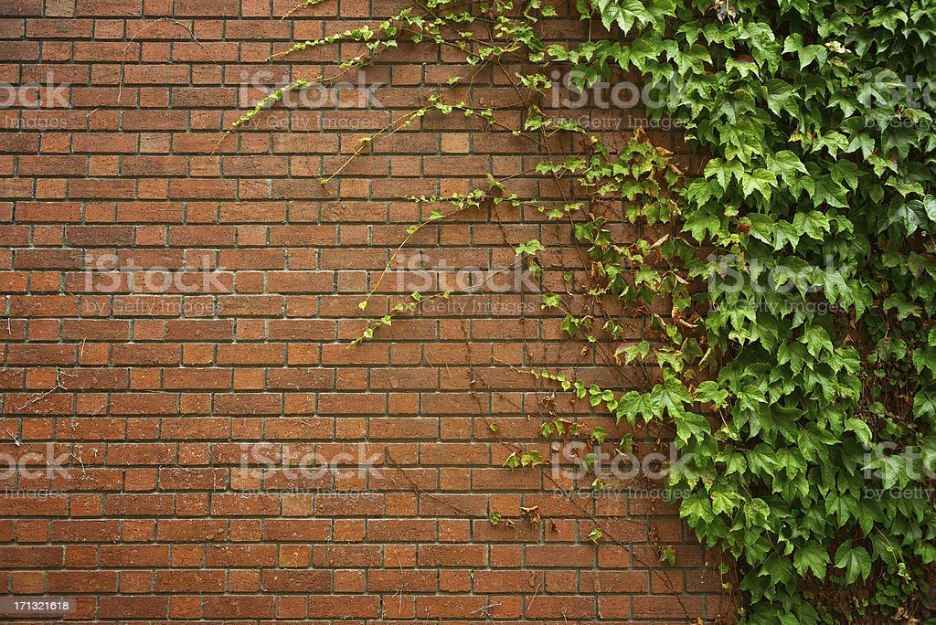 Brick Wall With Ivy stock photo