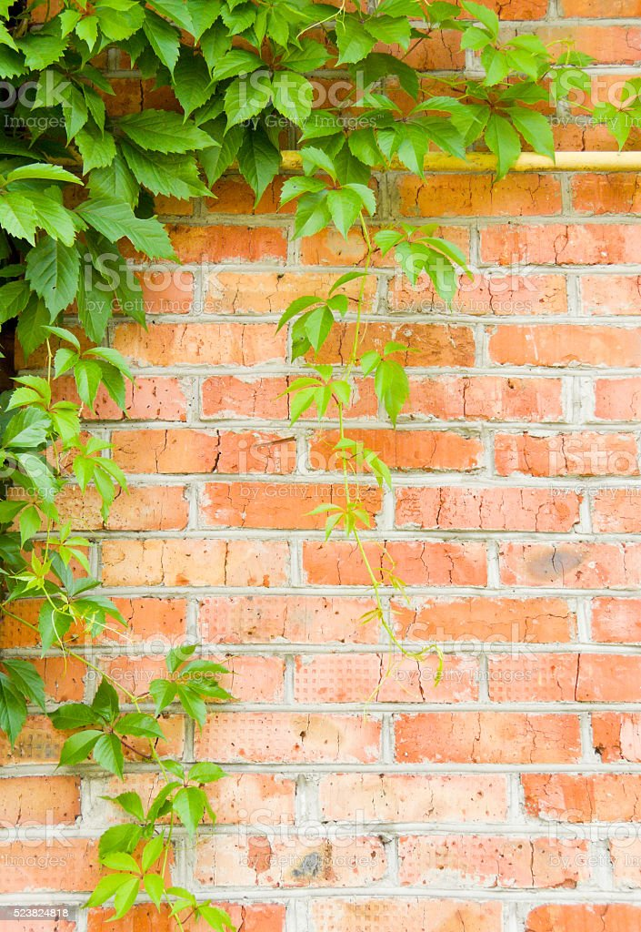 brick wall with loach stock photo