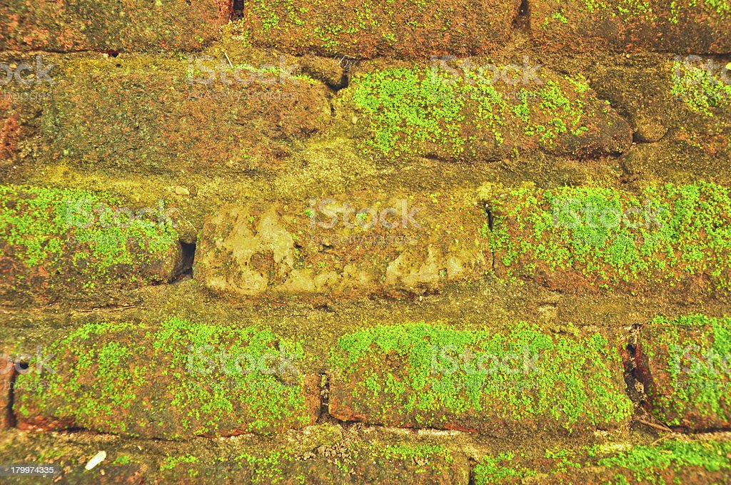 Brick wall with moss growing out of it royalty-free stock photo