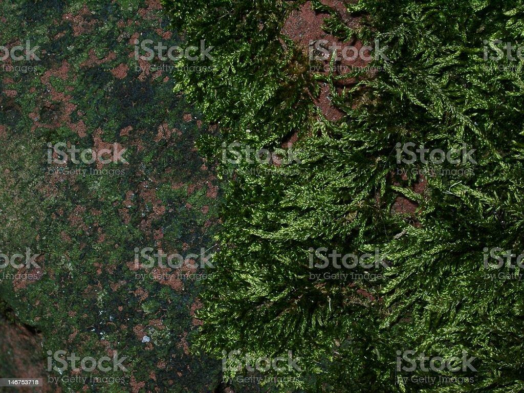 Brick with Moss stock photo
