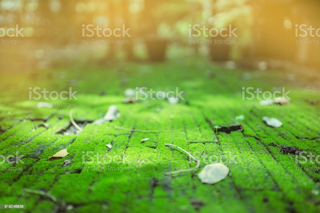Bricks path covered with green moss and leaf, selective focus, frame, blurred background stock photo