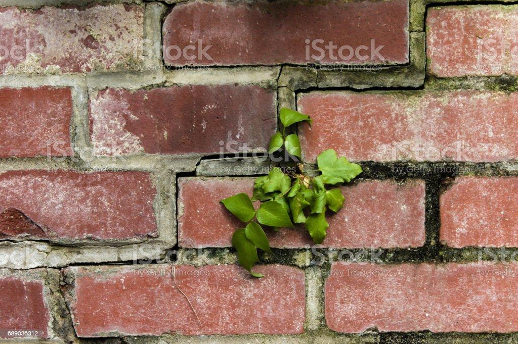 Bricks with masonry mortar joints stock photo