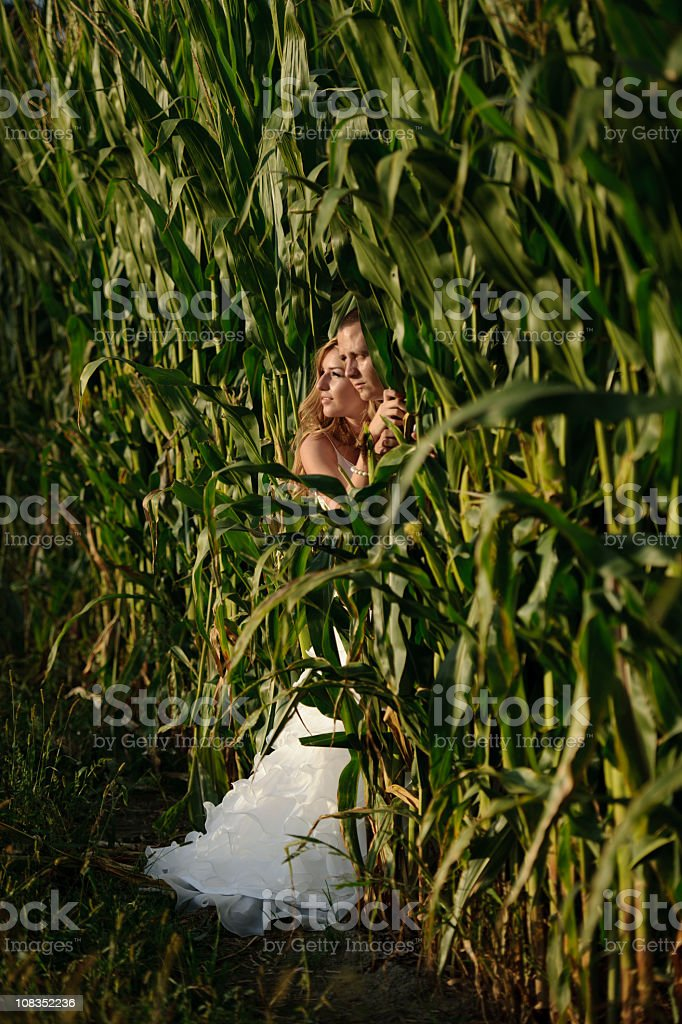 bride and groom in corn royalty-free stock photo