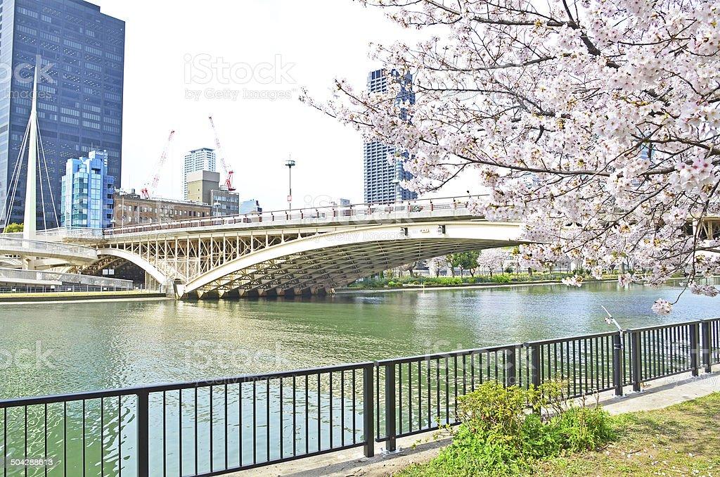 Bridge and Sakura stock photo