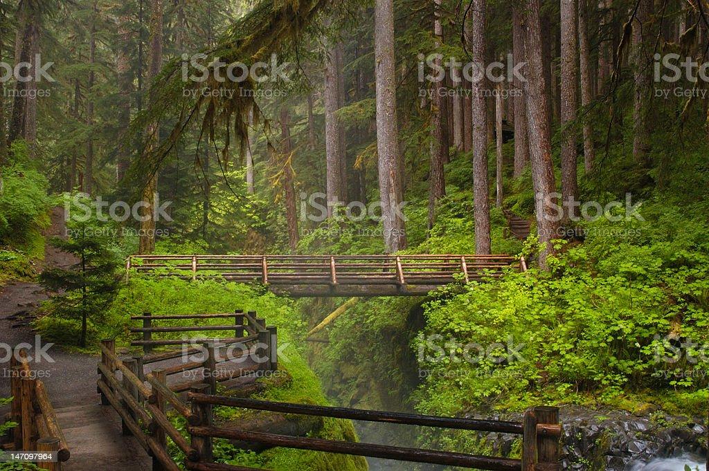 Bridge at Sol Duc Falls stock photo