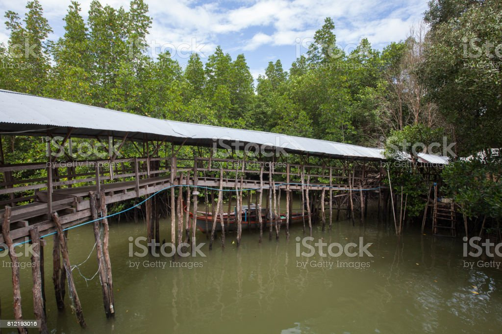 Bridge crossing brackish water in the mangrove forest, Thailand. stock photo