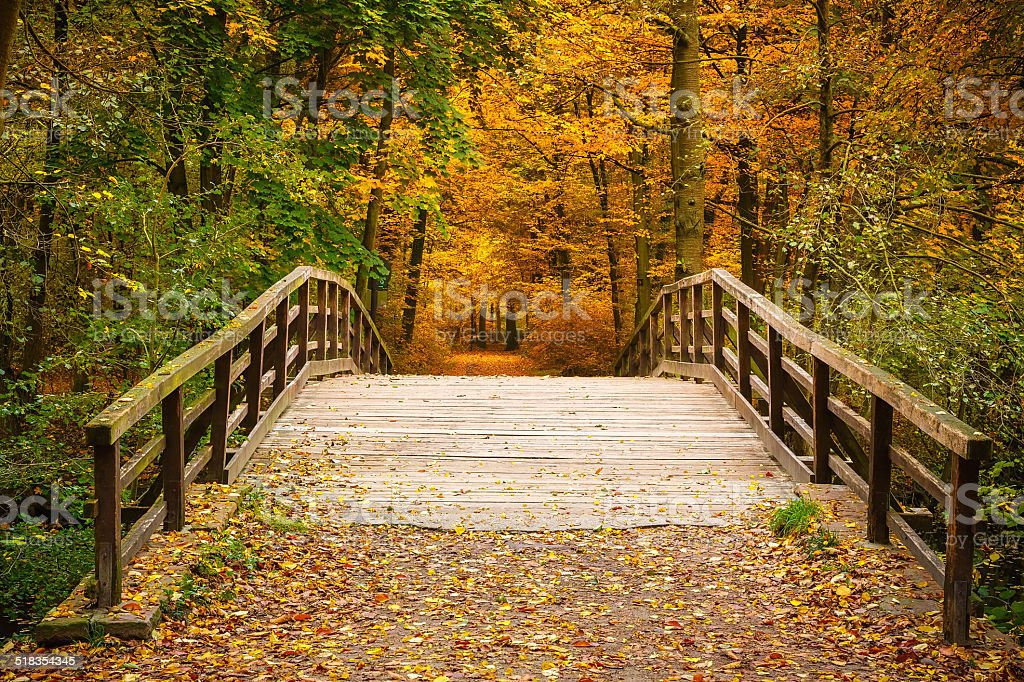 Bridge in autumn forest stock photo