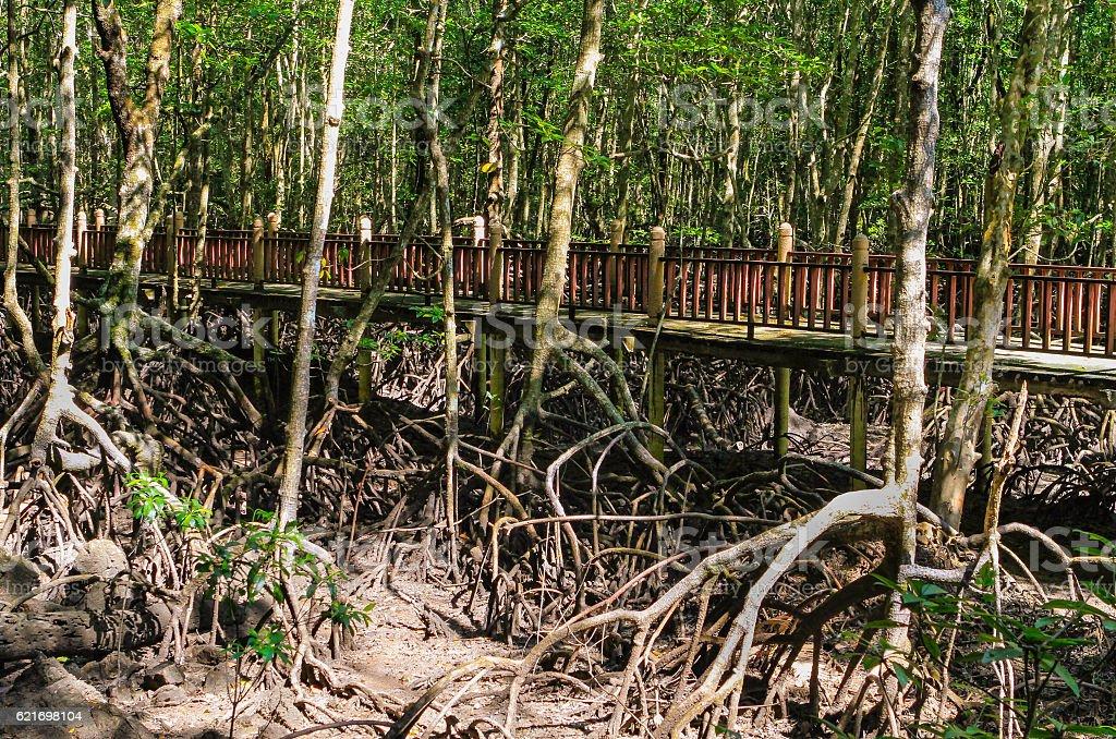 Bridge in mangroves stock photo