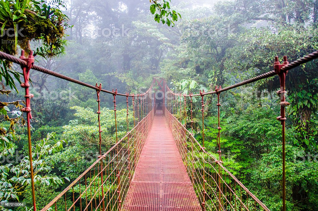 Bridge in Monteverde rainforest in Costa Rica stock photo