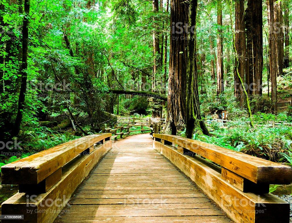 Bridge in Muir Woods National Monument, California stock photo
