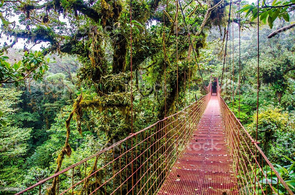 Bridge in Rainforest Monteverde - Costa Rica stock photo