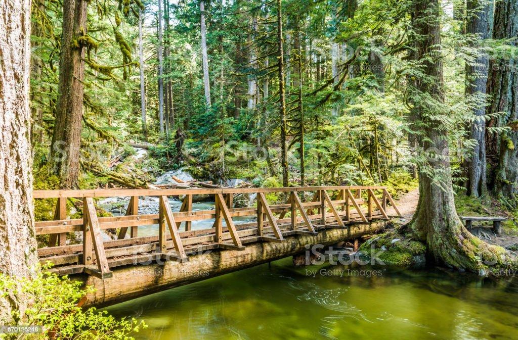 Bridge in the Woods stock photo