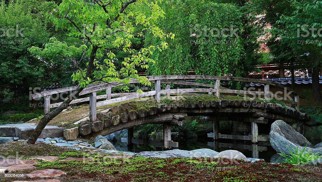 Bridge of green and the old tree foto de stock libre de derechos