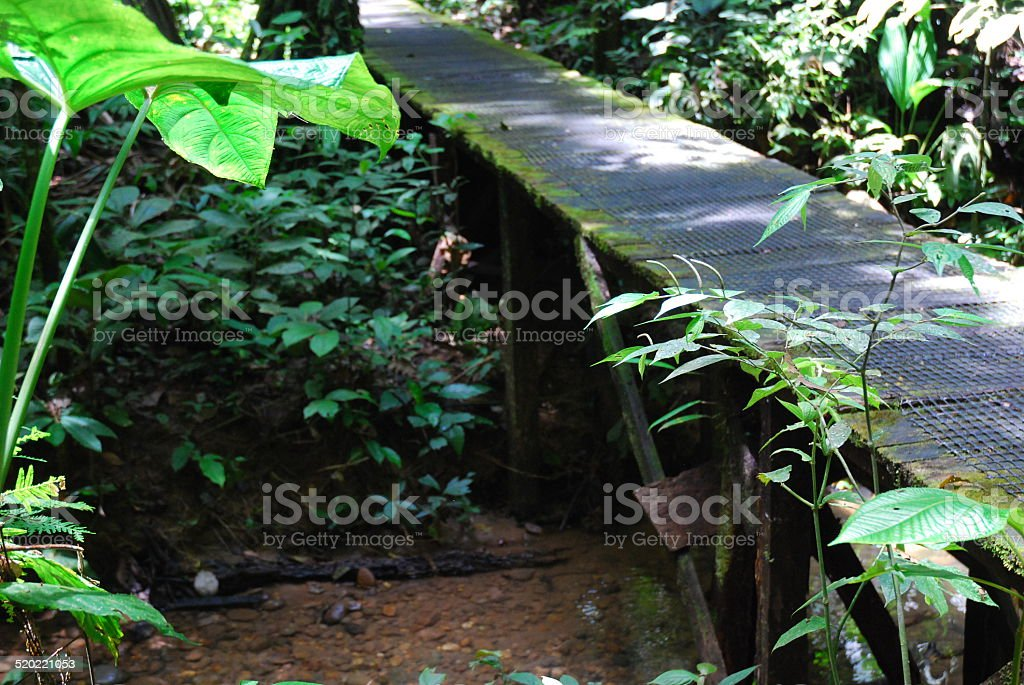 Bridge over a Creek royalty-free stock photo