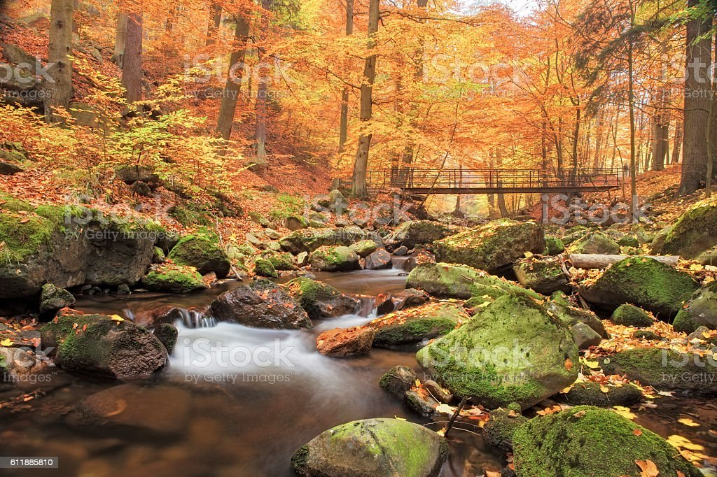 Bridge over Stream in Forest at autumn - Nationalpark Harz stock photo