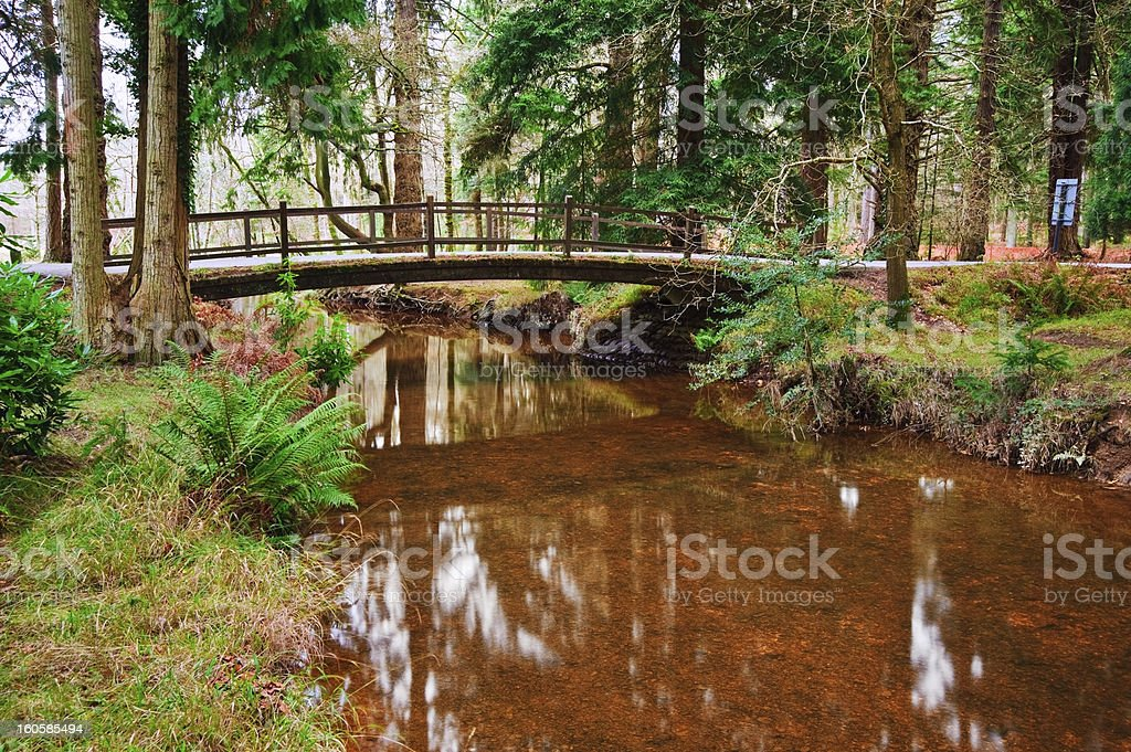 Bridge over stream in Winter Autumn Fall forest royalty-free stock photo