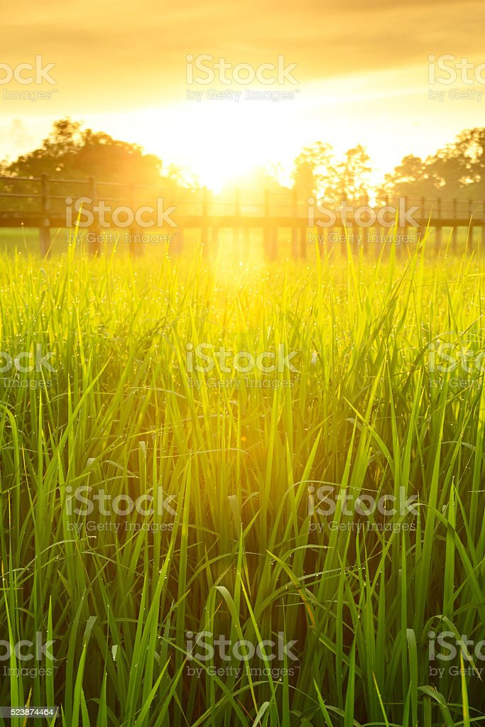 Bridge over the cornfield. stock photo