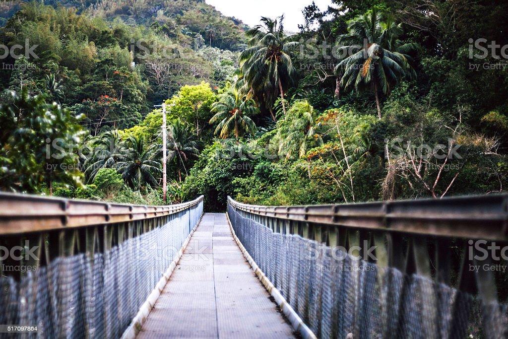 Bridge over the river in jungle. Jamaica. stock photo