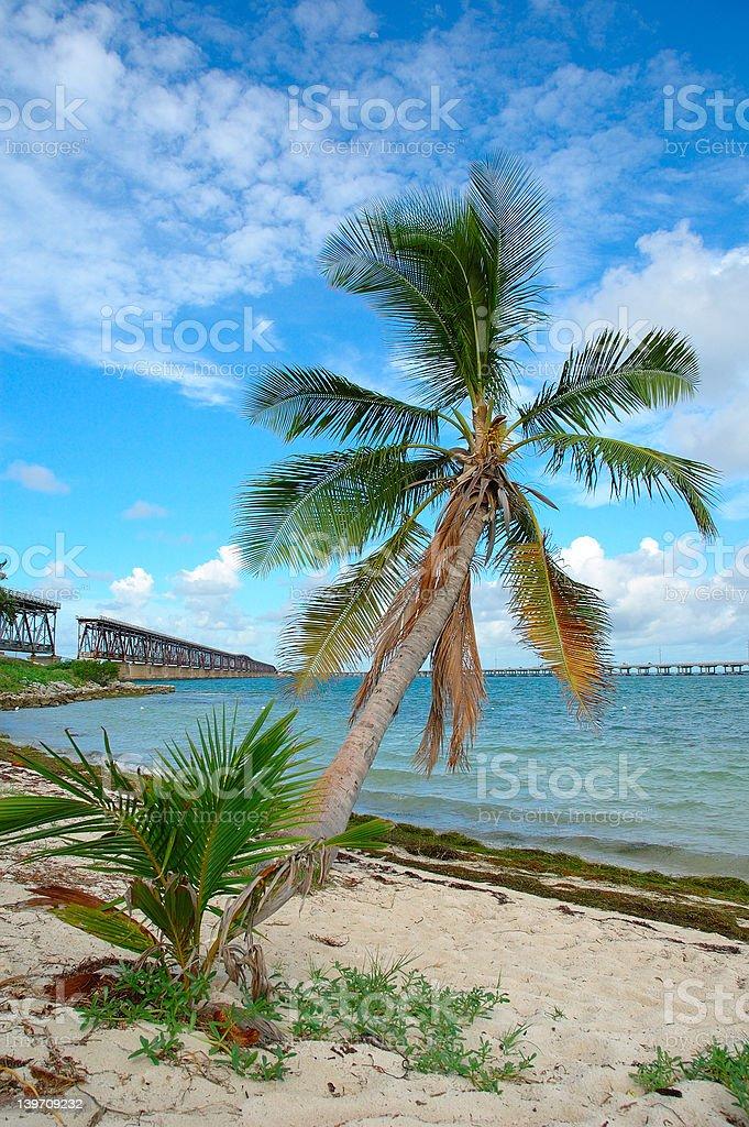 Bridge Palm royalty-free stock photo