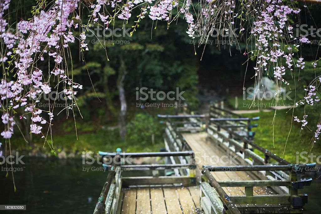 Bridge surrounded by cherry blossoms stock photo