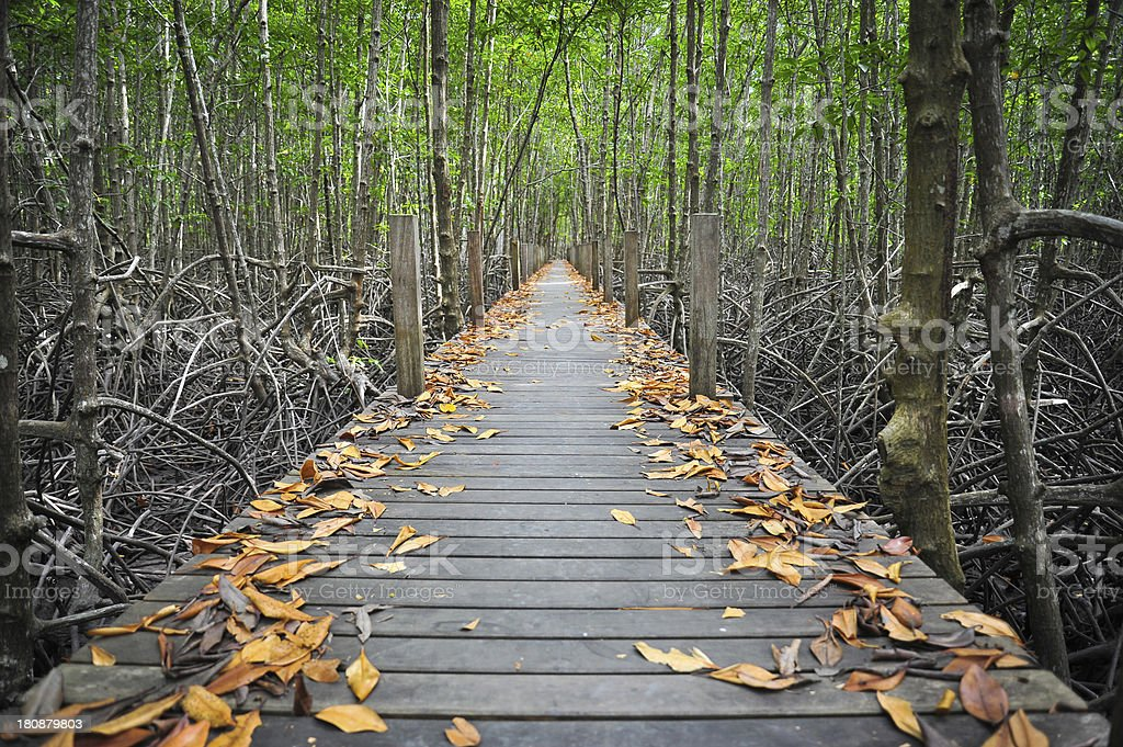 Bridge to forest royalty-free stock photo