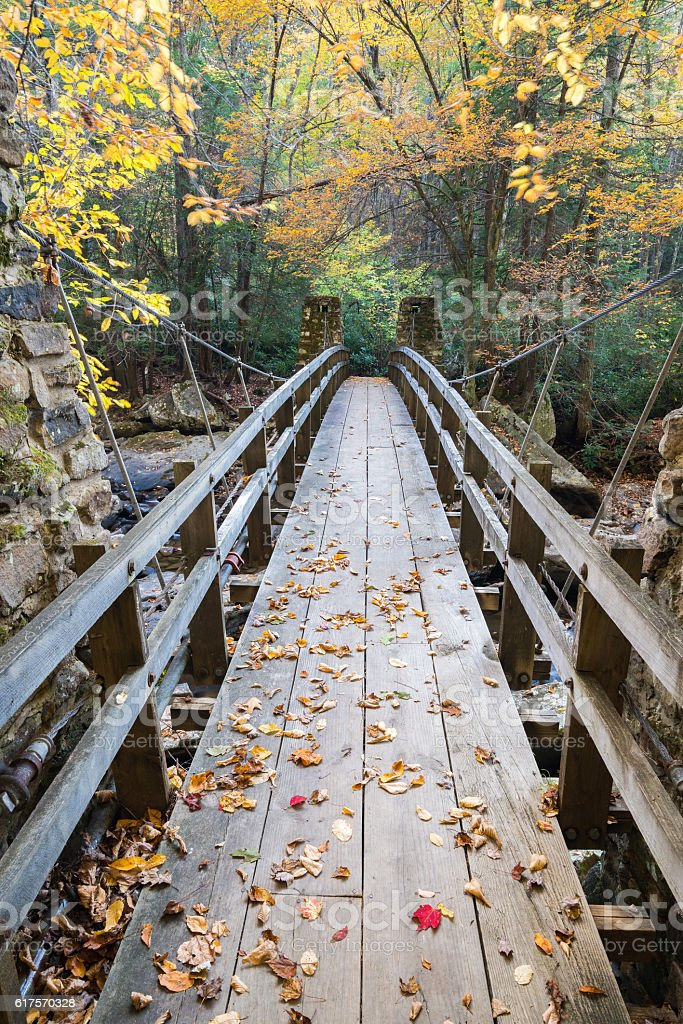 Bridge to the Forest royalty-free stock photo