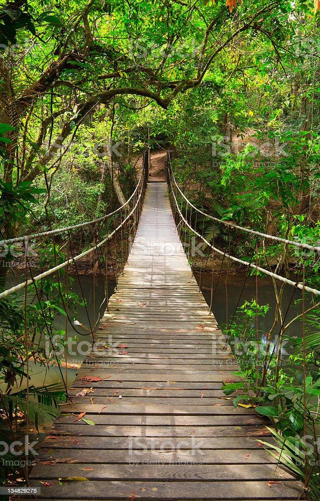 Bridge to the jungle stock photo
