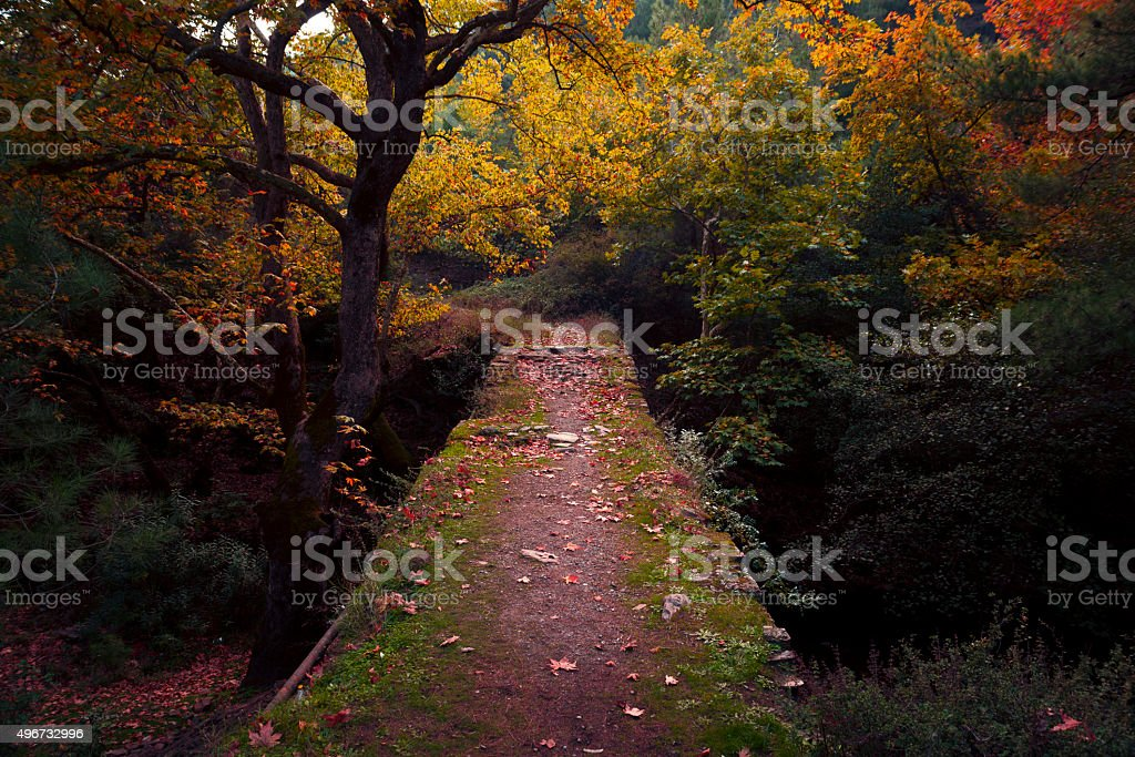 Bridge way in the woods. stock photo