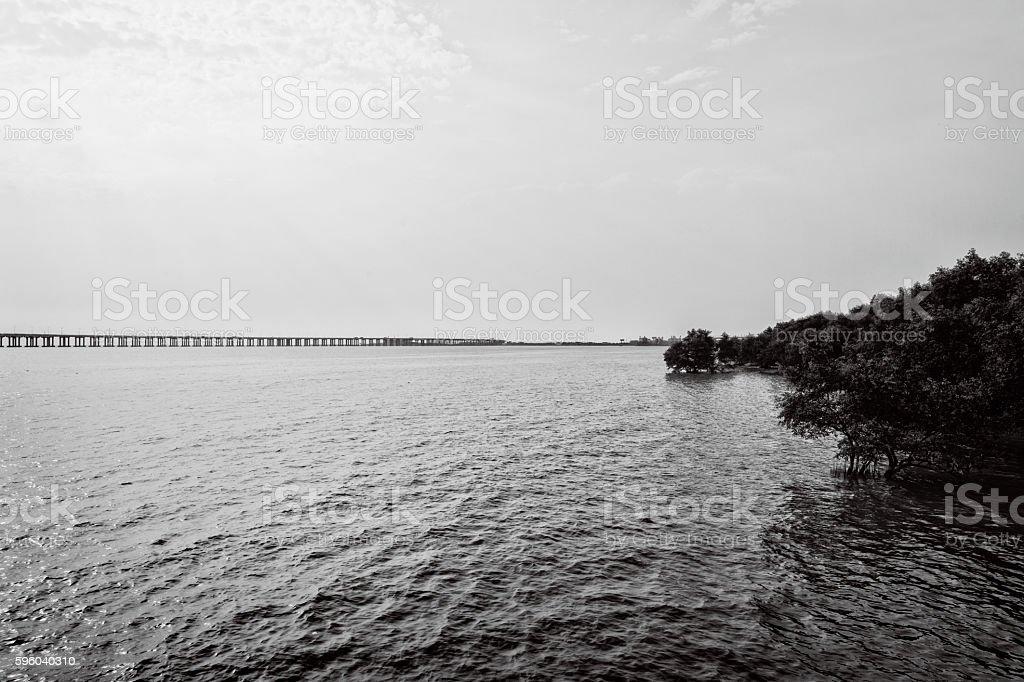 bridge,mangrove and sea stock photo