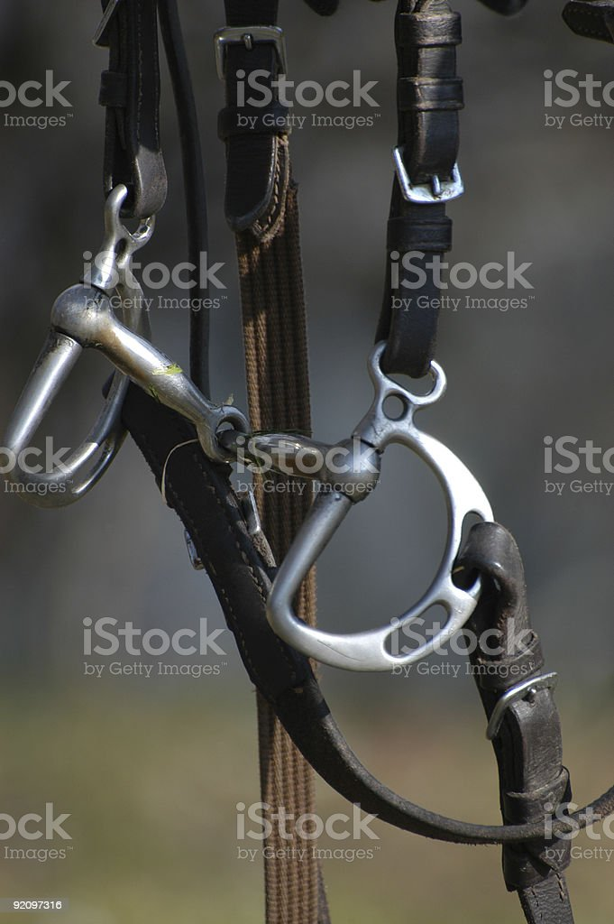 Bridle - Horse equipment stock photo