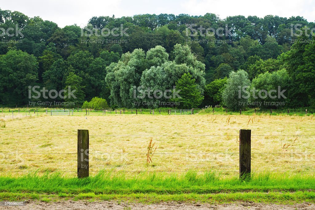 Bridle path and meadow stock photo