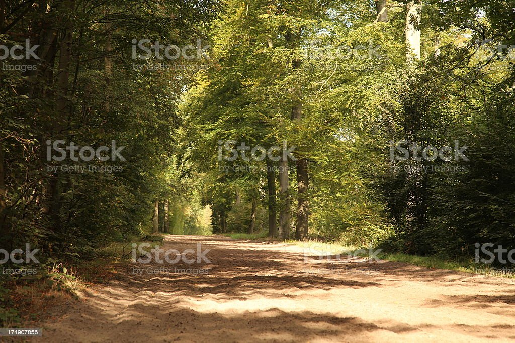 Bridleway in the woods royalty-free stock photo