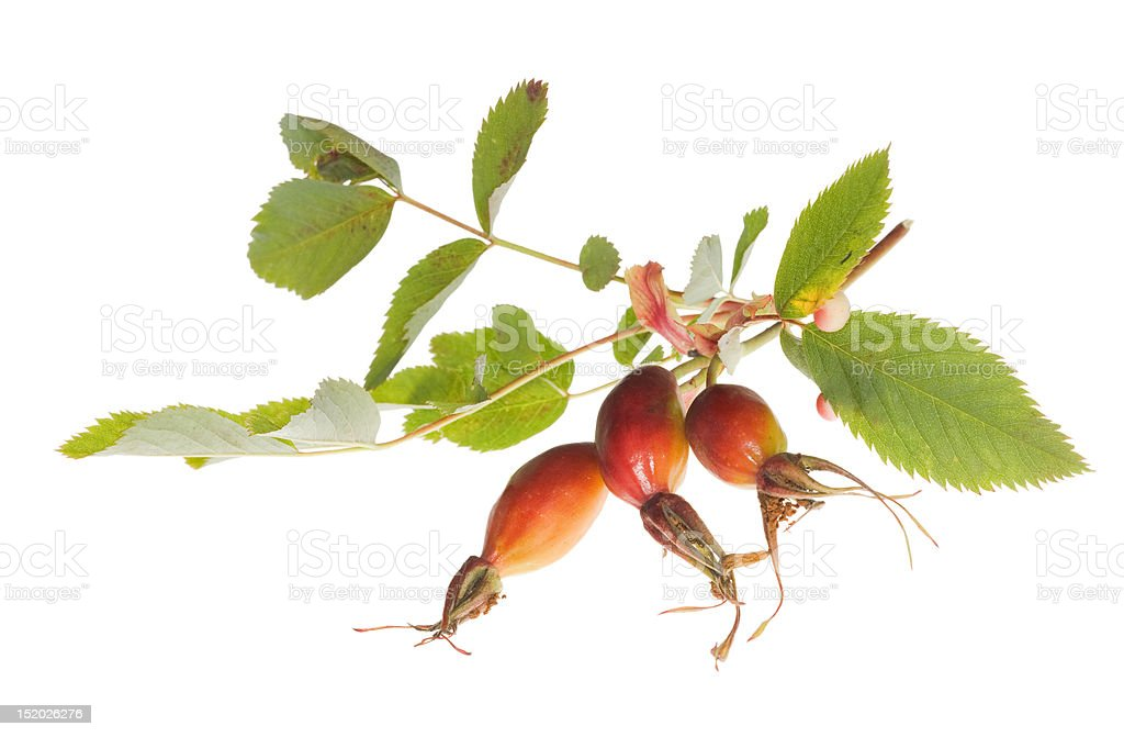 brier berries on white royalty-free stock photo