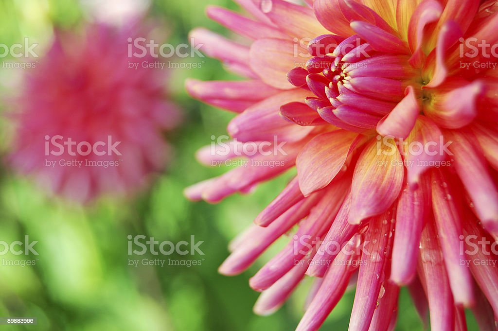 Bright and Beautiful royalty-free stock photo