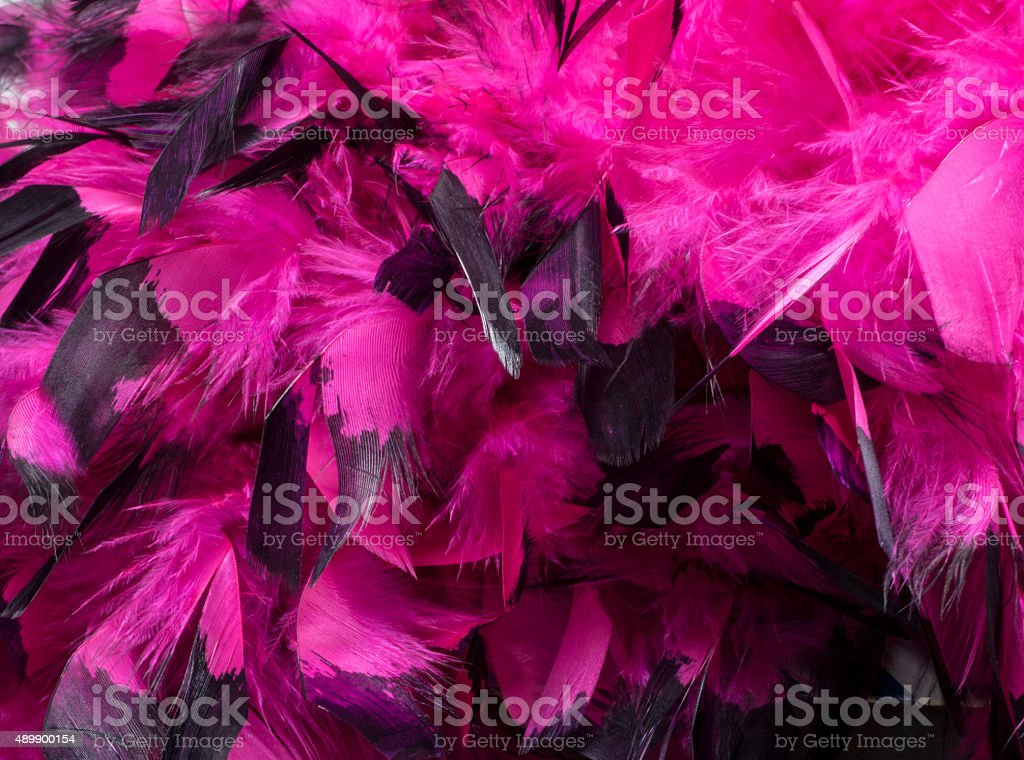 Bright and Colorful, Hot Pink Feathers Detail stock photo
