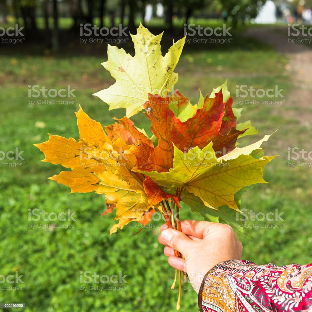 Bright autumn bouquet stock photo