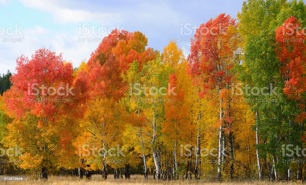 Bright Autumn Colors stock photo