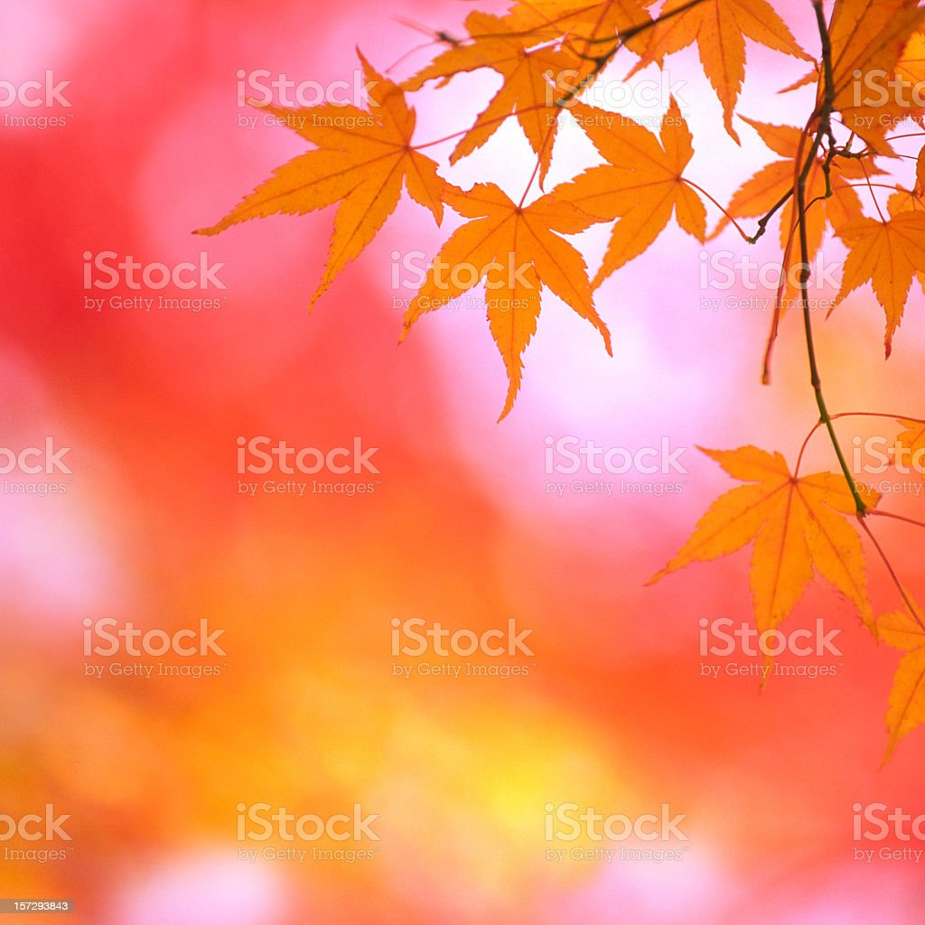 Bright Autumn Leaves royalty-free stock photo