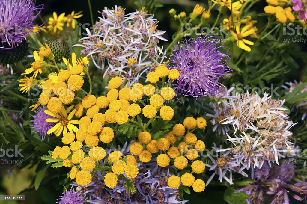 bright autumn wild flowers stock photo