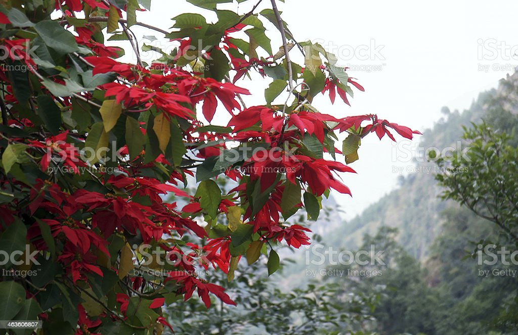 Bright branches with red flowers and mountain slope royalty-free stock photo