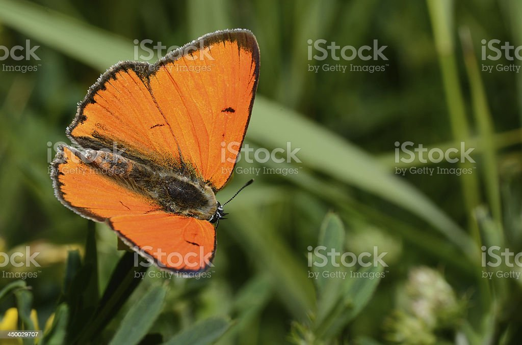bright butterfly stock photo
