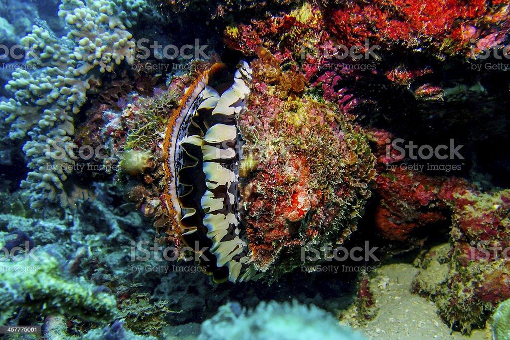 Bright clam stock photo