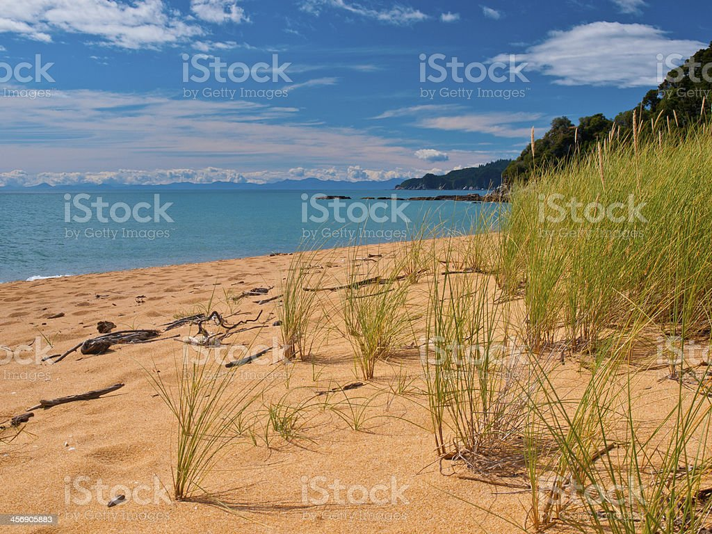 Bright Colored Dune Grass stock photo